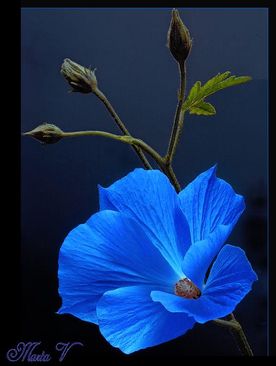 fleur bleu azul. Black Bedroom Furniture Sets. Home Design Ideas